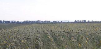 Έως τις 23 Ιουλίου οι δηλώσεις ζημίας καλλιεργειών στον ΕΛΓΑ για 6 οικισμούς της Αλέξανδρούπολης