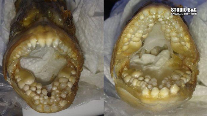 Αργολίδα: Δάσκαλος έπιασε αυτό το ψάρι – Άνοιξε το στόμα του και έμεινε στήλη άλατος