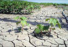 Αυξημένη η προκαταβολή των άμεσων ενισχύσεων και εξαίρεση από μέτρα πρασινίσματος με απόφαση Κομισιόν λόγω κλίματος