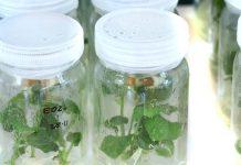 Οι βιοκαλλιεργητές αντιτίθενται στο ξεχωριστό πλαίσιο για τις νέες τεχνικές αναπαραγωγής φυτών
