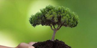Φυτέψτε ένα τρις νέα δένδρα σε όλο τον κόσμο για να «φρενάρουν» την κλιματική αλλαγή