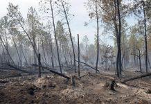 Γαλλία-καύσωνας: Χιλιάδες στρέμματα καλλιεργειών απανθρακώθηκαν από τις πυρκαγιές