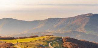 Γιατί κοκκινίζουν τα δάση της Ευρώπης;