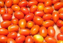 Κατάσχεση σε τοματίνια με υπολείμματα φυτοφαρμάκων