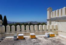 Μελίσσια για πρώτη φορά σε στέγη δημόσιου κτηρίου στην Ελλάδα