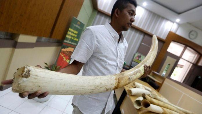 Σιγκαπούρη: Κατάσχεση ρεκόρ 8,8 τόνων ελεφαντόδοντου που προερχόταν από 300 ελέφαντες