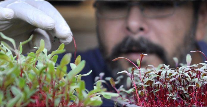 """Ανοικτό αγρόκτημα φυσικής καλλιέργειας στην πόλη σχεδιάζει ο """"Μικρός Καλλιεργητής"""""""