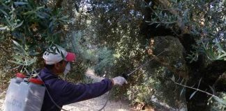 Δακοκτονία 2019 – 2ος Ψεκασμός στη Δημοτική Κοινότητα Χίου