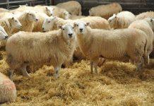Έρχεται το 1ο Φεστιβάλ αιγοπρόβειου κρέατος και τοπικών προϊόντων στον δήμο Θέρμης