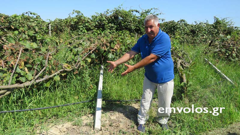 Ημαθία: «Επιτήδειοι» διέθεταν τσιμεντένιους πασσάλους στήριξης χωρίς σίδερα σε αγρότες