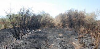 Καταστροφές από πυρκαγιά στην προστατευόμενη περιοχή Αλυκής Κίτρους