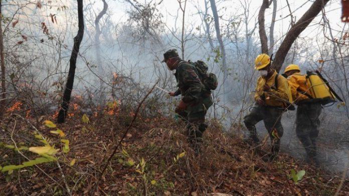Τουλάχιστον 2,3 εκατ. άγρια ζώα πέθαναν στις πυρκαγιές στη Βολιβία