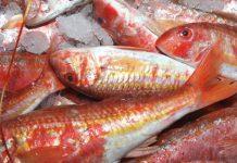 Δέσμευση αλιευμάτων στην ιχθυόσκαλα Κερατσινίου