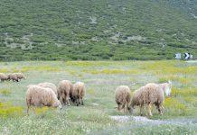 Διαμαρτυρία κτηνοτρόφων για ανοιχτές τιμές και ποινικές ρήτρες - Ζητούντην προστασία της πολιτείας