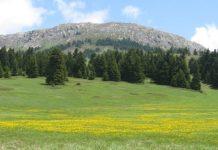 ΕΛΓΟ-ΔΗΜΗΤΡΑ: Σεμινάριο για την διατήρηση των δασών στα όρη Οίτη και Καλλίδρομο