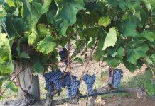 Την Κυριακή 6 Οκτωβρίου «γευόμαστε» τα κρασιά της Νάουσας