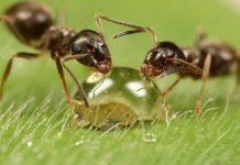 Τα μυρμήγκια προστατεύουν τα φυτά από ασθένειες - Ανοίγει ο δρόμος για βιολογικά φυτοφάρμακα