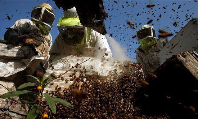 Υπέρ της προστασίας των μελισσών το Ευρωκοινοβούλιο