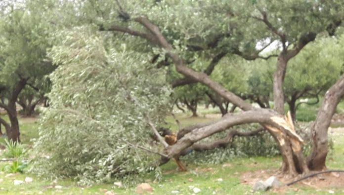 Δήμος Αποκορώνου: Υποβολή δηλώσεων για ζημιές σε καλλιέργειες έως τις 18/10