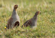 Ανακοινώθηκαν οι δικαιούχοι της δράσης 10.1.01 για την «Προστασία της άγριας ορνιθοπανίδας»