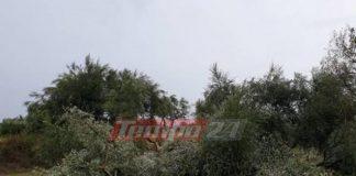 Αχαία: Ανεμοστρόβιλος έκοψε στη μέση ελαιόδεντρα - Σήκωσε στον αέρα σκεπή στάβλου