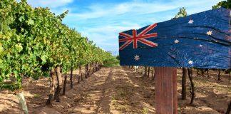 Η Αυστραλία ξεπέρασε τη Γαλλία στην Κίνα σε αξία εξαγωγών οίνου