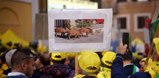 Ιταλία: Οι αγρότες διαμαρτύρονται για τα αγριογούρουνα