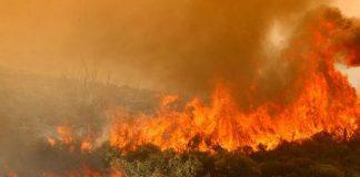 Η καύση των σιτοκαλαμιών «καίει» τις επιδοτήσεις όλων των χωραφιών