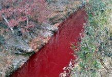 Ν. Κορέα: Ποταμός βάφτηκε κόκκινος από το αίμα χοίρων που σφαγιάσθηκαν λόγω της αφρικανικής πανώλης