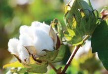 Η SIPCAM Ελλάς αναλαμβάνει την αποκλειστική διανομή των σπόρων της GREENCO στη Νότια Ευρώπη