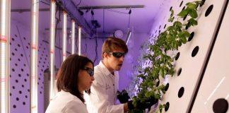 Τσέχοι επιστήμονες καλλιεργούν τα πρώτα φυτά για τον Άρη