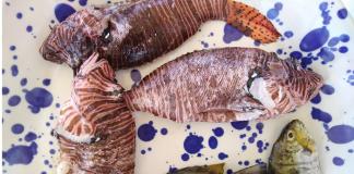 Βιβλίο μαγειρικής με θαλάσσια ξενικά είδη!