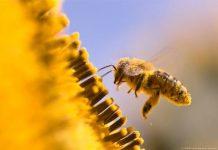 Το ΕΚ ζητά ελάττωση της χρήσης φυτοφαρμάκων για να σωθούν οι μέλισσες