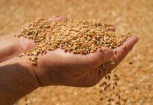 Κίνα: Η παραγωγή σιτηρών θα διατηρηθεί στο επίπεδο άνω των 650 δισ. κιλών το 2020
