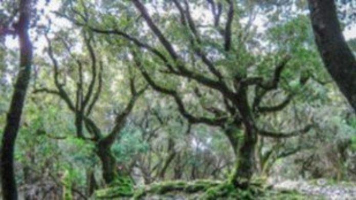 Κομοτηνή:1.000 δέντρα θα φυτευτούν στην Πανεπιστημιούπολη του Δημοκρίτειου