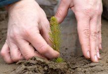 Κομοτηνή: Ενεργοί πολίτες προστατεύουν τη Φύση