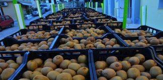 """""""Τέρμα γκάζι"""" για περισσότερες αγορές του εξωτερικού «πατά» το ελληνικό ακτινίδιο"""