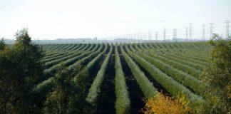 Ελαιόλαδο: Με κινητοποιήσεις απειλούν ξανά οι Ισπανοί – «Εξοντώνουν» την καλλιέργεια οι πυκνές φυτεύσεις