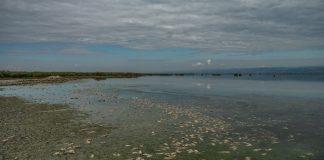 Βουλγαρία: Νεκρά ψάρια ξεβράστηκαν στις όχθες ποταμών - Έρευνα των αρχών