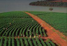 Βραζιλία: Οι καλλιέργειες καφέ έμειναν σχεδόν αλώβητες από τις καταστροφικές πλημμύρες