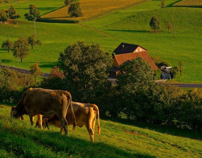 Cropfeed: Βελτιστοποίηση της παραγωγής ζωοτροφών του ΘΕΣγη μέσα από ερευνητικό έργο