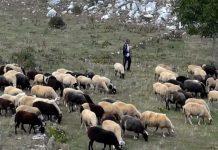 Ξήλωσε κτηνοτροφικές μονάδες στη Ροδόπη ο «Ηφαιστίωνας»