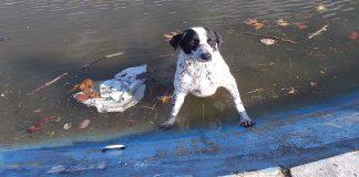 Κτηνοτρόφος έσωσε σκύλο που έπεσε σε τεχνητή λίμνη