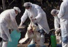 Ουγγαρία: Δεύτερο κρούσμα της γρίπης των πτηνών εντοπίστηκε μέσα σε μια εβδομάδα