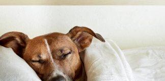 Καμπάνια για την προστασία των ζώων και τις ποινές που επισύρει η κακοποίηση τους ξεκινά ο δήμος Ωραιοκάστρου