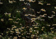 Εφιαλτική επιδρομή ακρίδων στην Ανατολική Αφρική: Ο ΟΗΕ προειδοποιεί με κίνδυνο λιμού