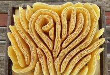 Είναι καλλιτέχνες οι μέλισσες;