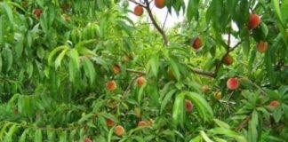 Η κλιματική αλλαγή «τρέφει» τα ζιζάνια απειλώντας τις καλλιέργειες
