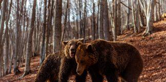 Νυμφαίο: Οι αρκούδες ξύπνησαν και σας περιμένουν (βίντεο+φώτος)
