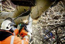 Σλοβενία: Εκτεταμένες καταστροφές στα δάση από την κακοκαιρία